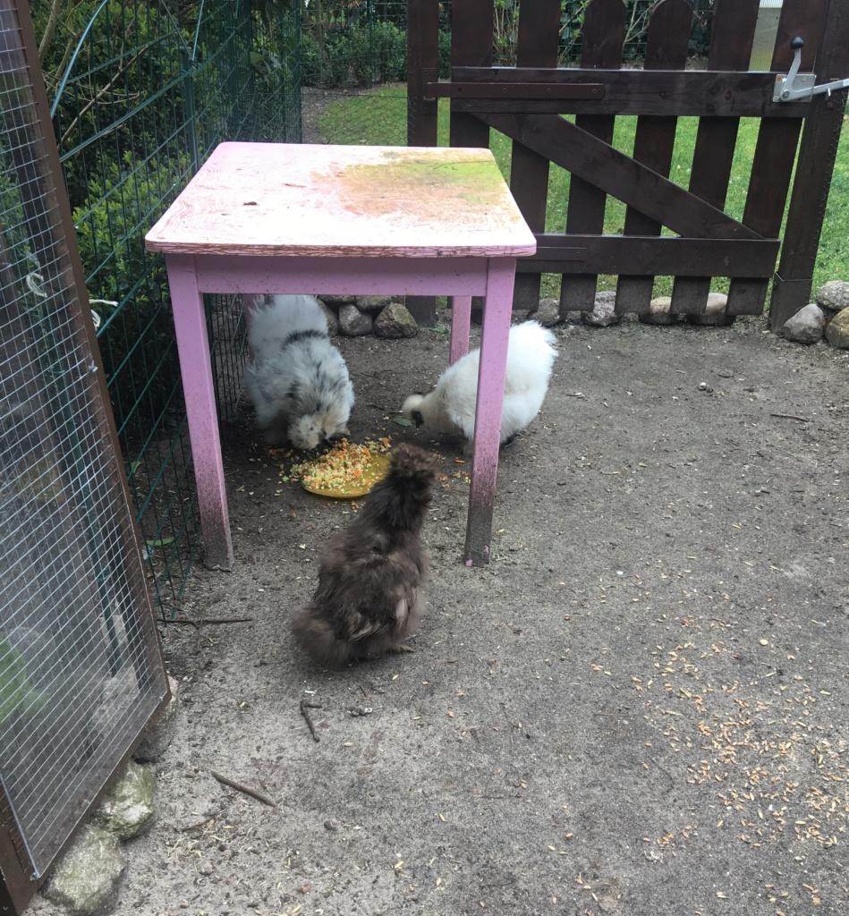 Alter Kindertisch als Regendach für Zwerghühner