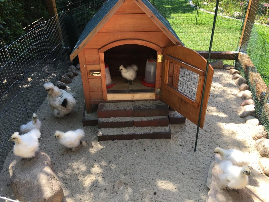 umgebaute hundehütte als legenest für hühner