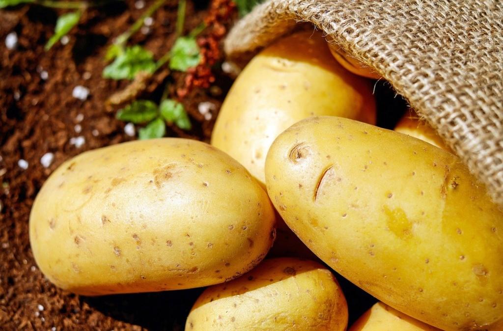 Kartoffeln Gemüse Erdfrucht Bio